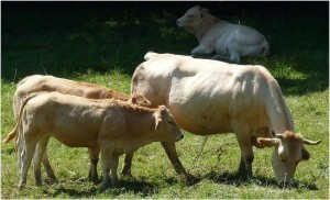 Agriculture a Bearn,Aquitaine,France