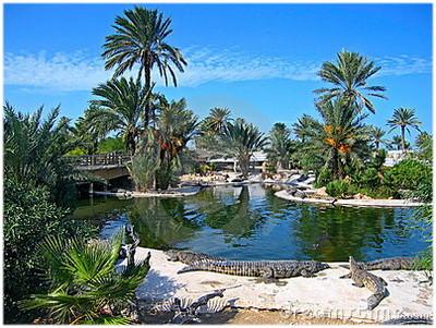 La ferme aux crocodiles au parc Djerba Explore