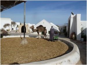Le musée de Guellala Djerba Tunisie