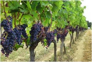 vignoble,Bordeaux est situee au sud-ouest de la France,departement de la Gironde dans la region Aquitaine a tous les atouts pour un sejour de reve;nature,hébergement