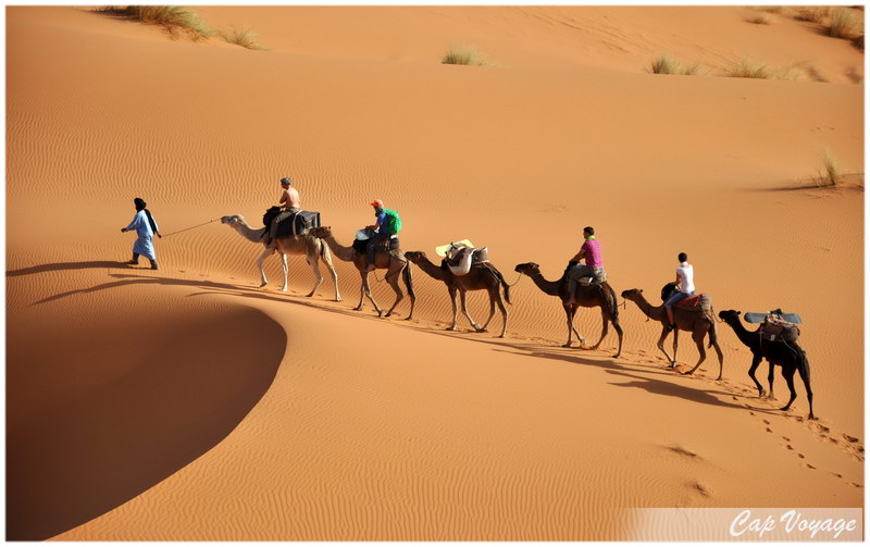 Excursion a dos de chameaux au Sahara Tunisien.