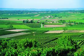 Poitou-Charentes,France,vignobles