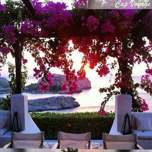 Santorin, Grece, fleurs