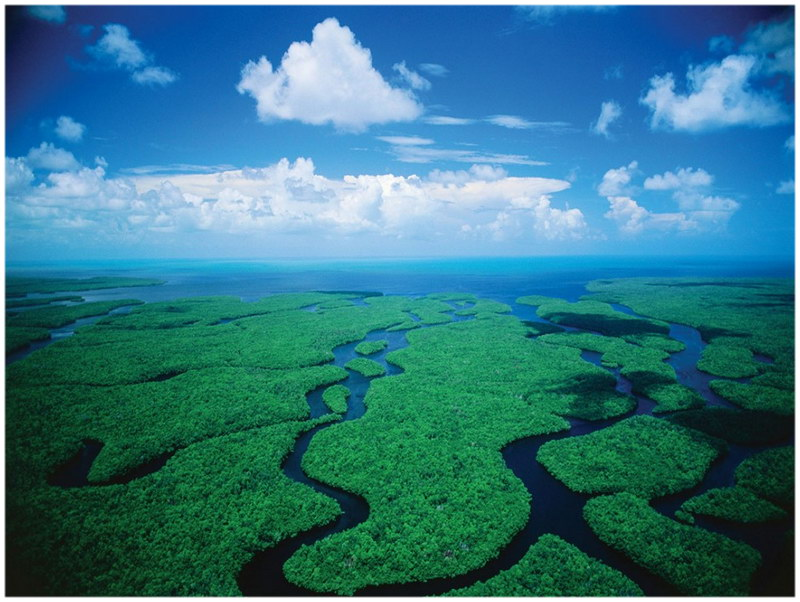 Parc National des Everglades - Floride, Etats-Unis.