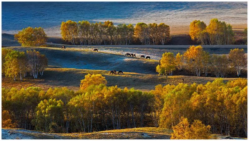 Les prairies de Bashang