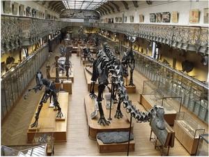 Musée d'Histoire Naturelle, Milan, Italie
