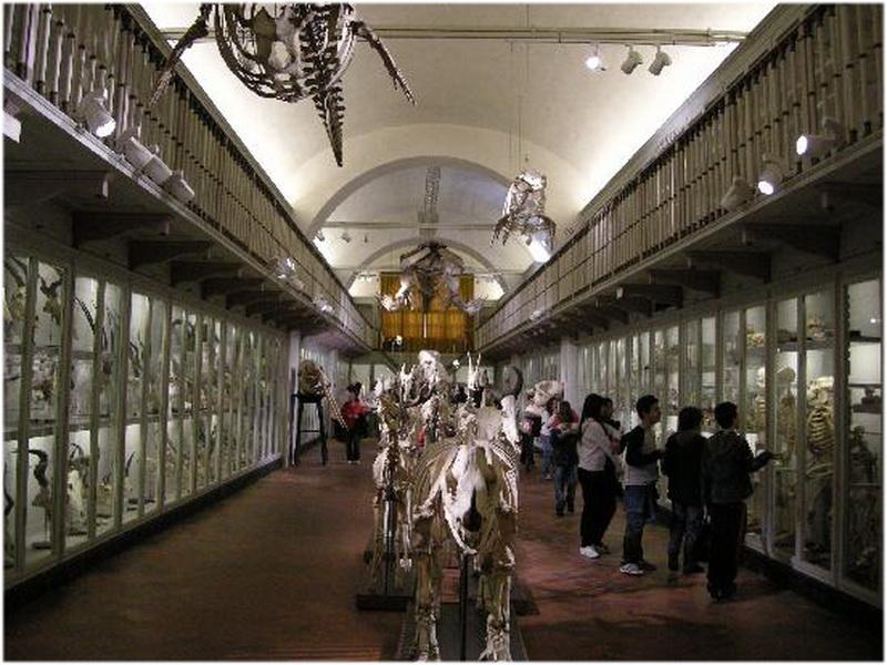Musée d'histoire naturelle, Florence, Italie