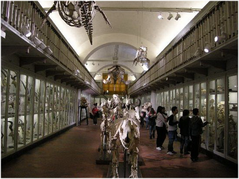 Mus U00e9e D U0026 39 Histoire Naturelle  Florence  Italie