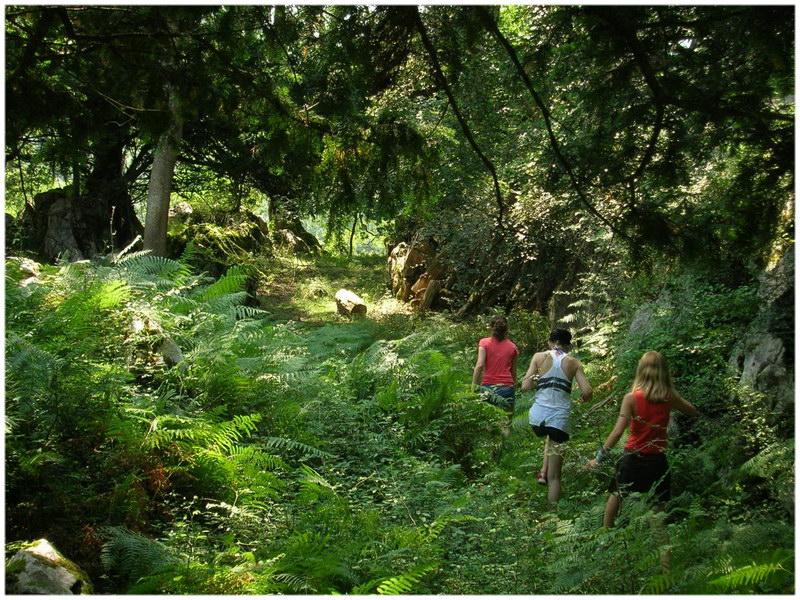 La forêt d'Iraty (Pays Basque)