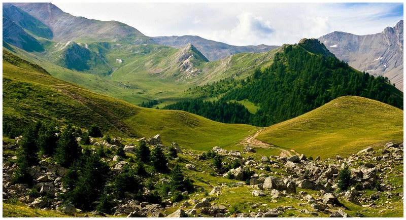 forêt de Boscodon (Hautes Alpes)
