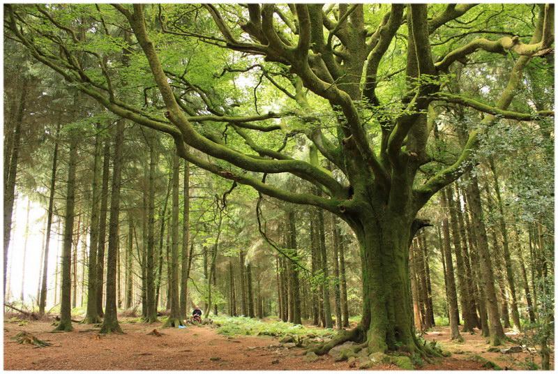 La forêt de Brocéliande (Bretagne)