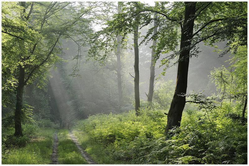La forêt de Compiègne (Picardie)