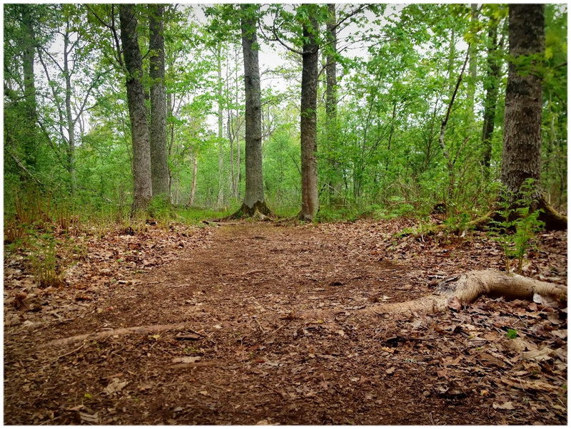 La forêt de Fontainebleau (Seine-et-Marne)