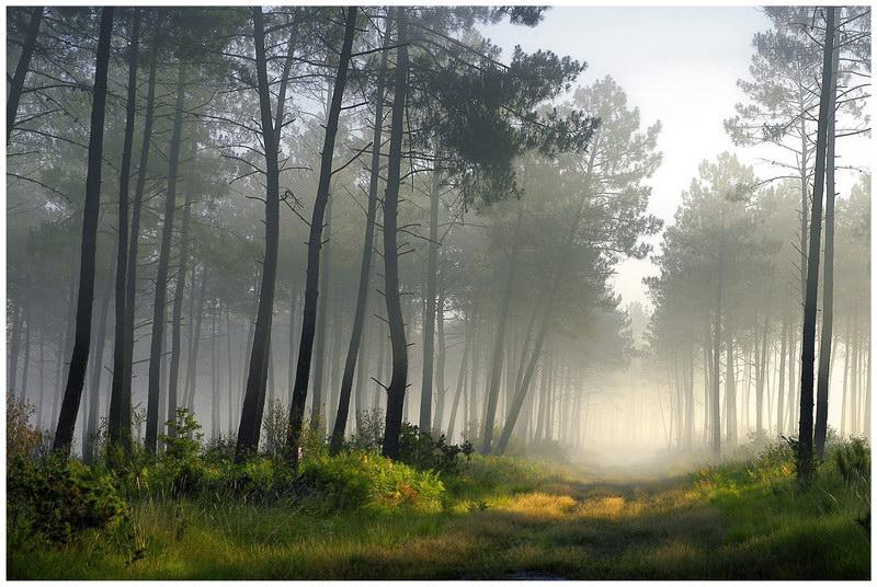 La forêt de Vizzavona (Haute Corse)