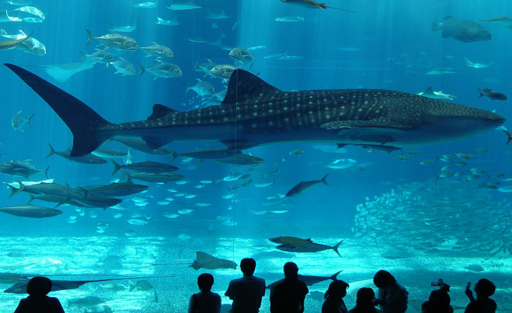 Aquarium d'Istanbul