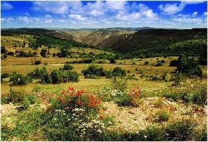 Gard,Languedoc-Roussillon-Midi-Pyrenees,France, environnemen