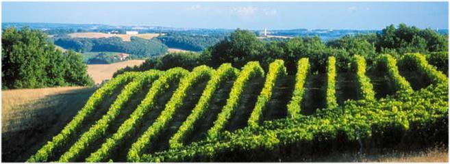 LaGascogne, Aquitaine, Midi-Pyrénées, France, les vignobles