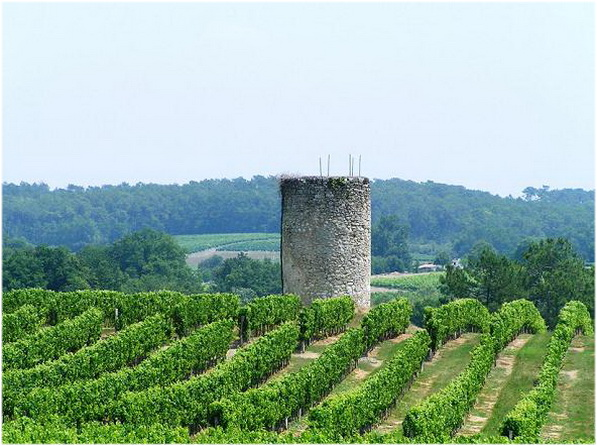 Targon, laGironde, Aquitaine-Limousin-Poitou-Charentes, France