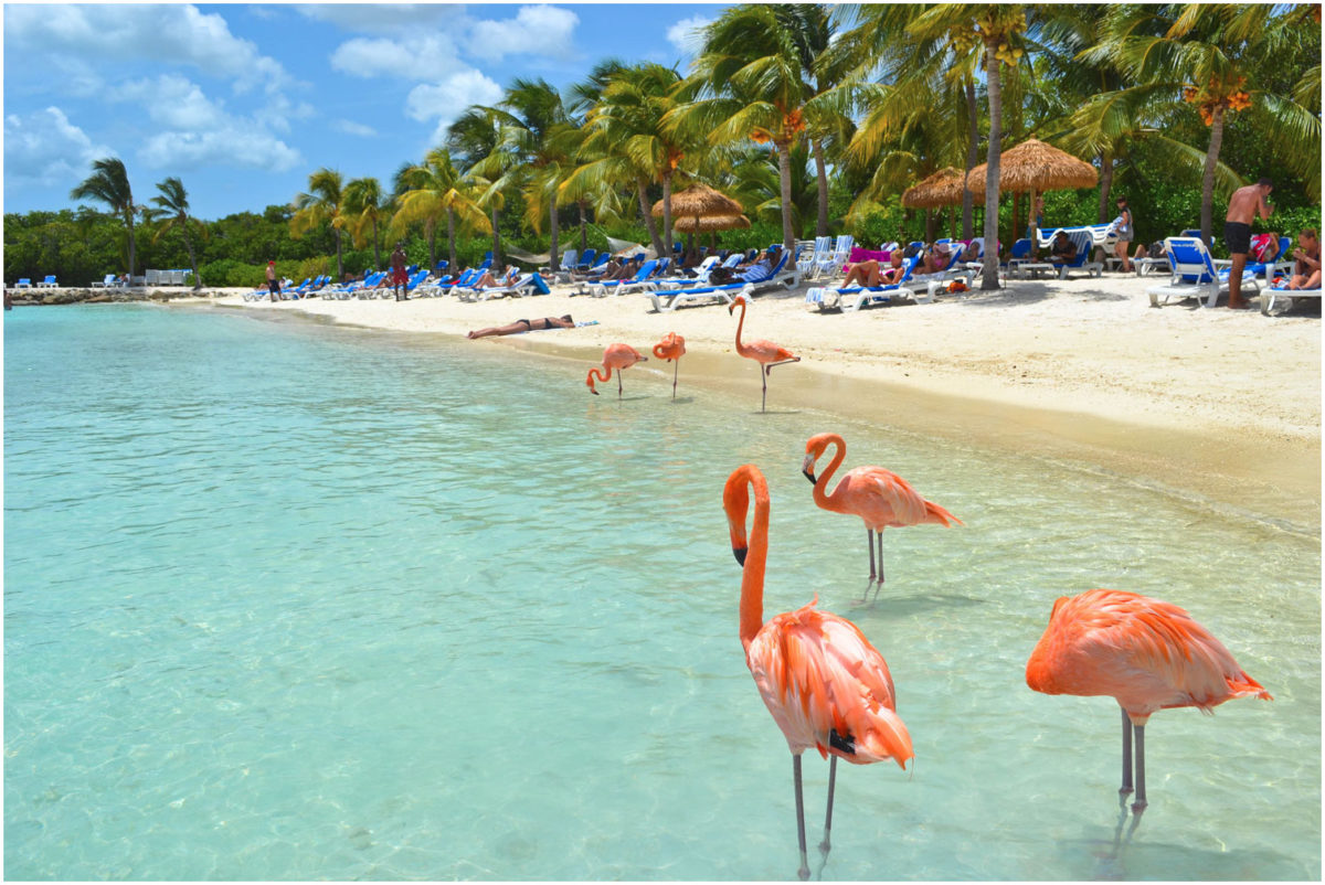Aruba solo