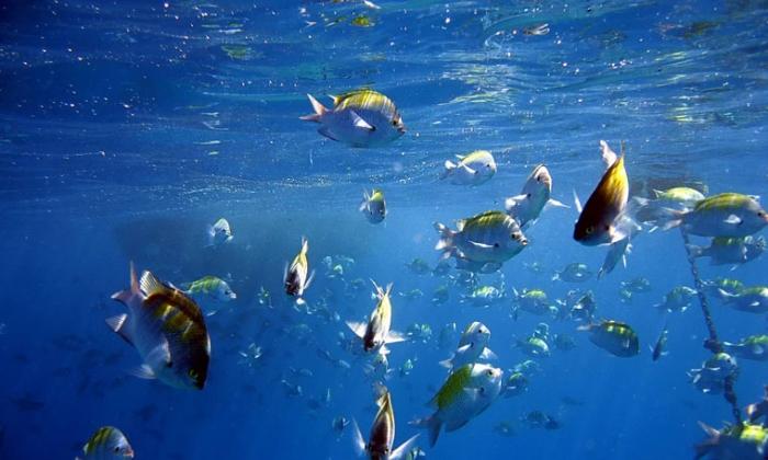 mer de cortez poissons