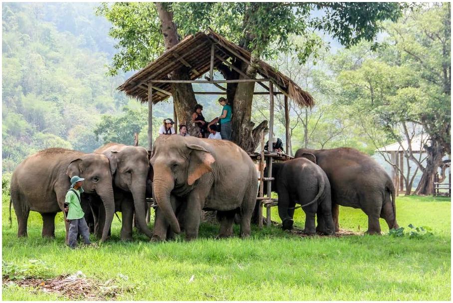 Thaïlande-guide-voyage-elephant
