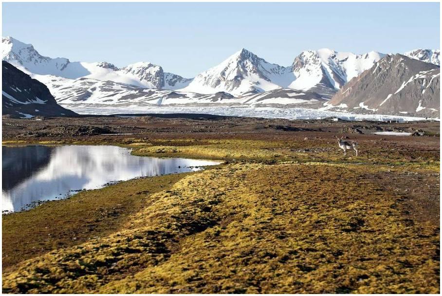 Svalbard-choses-a-faire-en-Norvege-