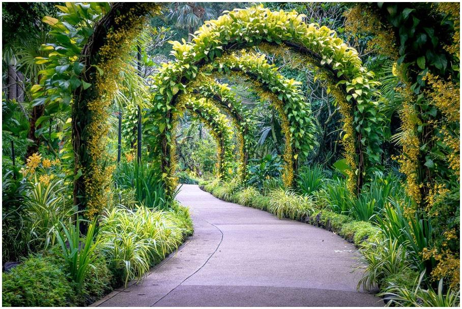 lune-de-miel-Singapour-Les-jardins-botaniques-min