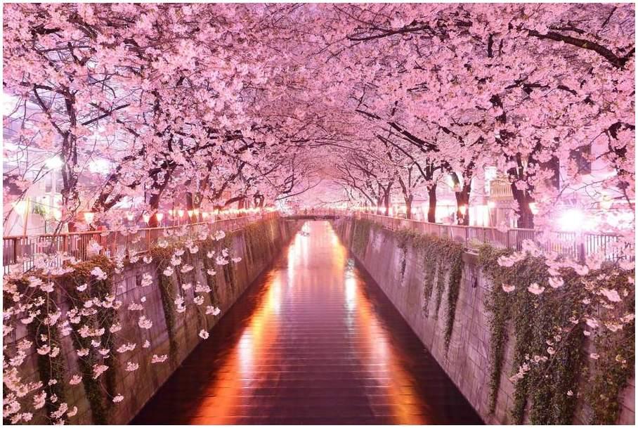 10 attractions touristiques incontournables au Japon