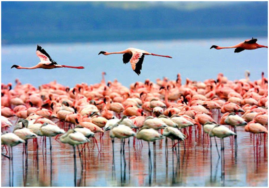 parc-national-Manyara