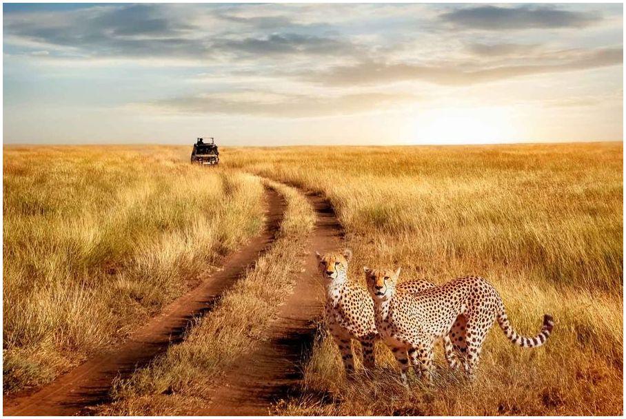 Safari-en-Afrique