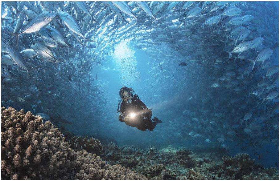 plongée-sous-marine-a-cuba