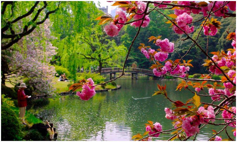 shinjuku-jardin-tokyo