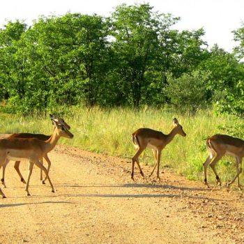 réserve naturelle en Afrique